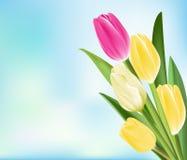 Tulipanes coloridos realistas en fondo stock de ilustración