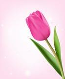 Tulipanes coloridos realistas en fondo libre illustration