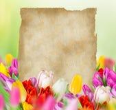 Tulipanes con el papel en blanco viejo Fotos de archivo