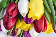 Tulipanes con gotas del agua Imagen de archivo libre de regalías