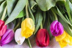 Tulipanes con gotas del agua Fotografía de archivo