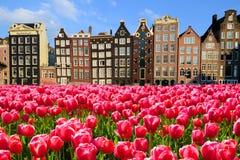 Tulipanes con las casas del canal de Amsterdam Fotos de archivo