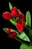 Tulipanes con rocío imagen de archivo