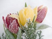Tulipanes congelados Imágenes de archivo libres de regalías