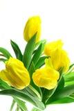 Tulipanes de Beautful en un blanco Foto de archivo