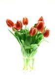 Tulipanes de Beautful en un blanco Imagen de archivo libre de regalías