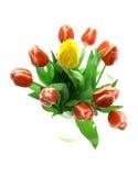 Tulipanes de Beautful en un blanco Fotos de archivo libres de regalías