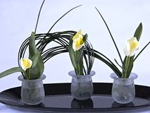 Tulipanes de Deleicate Fotos de archivo
