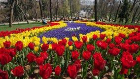 tulipanes de la belleza fotografía de archivo libre de regalías