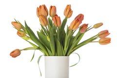 Tulipanes de la mandarina en el florero blanco aislado Foto de archivo libre de regalías