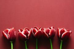 Tulipanes de la marsala Imagenes de archivo