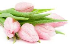 Tulipanes de la primavera Imágenes de archivo libres de regalías