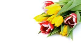 Tulipanes de la primavera Imagen de archivo libre de regalías
