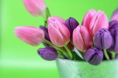 Tulipanes de la primavera Foto de archivo libre de regalías