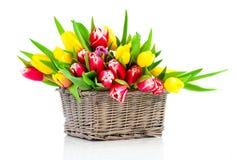 Tulipanes de la primavera en cesta de madera Foto de archivo libre de regalías