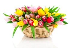 Tulipanes de la primavera en cesta de madera, Imagenes de archivo