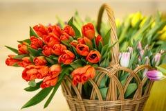 Tulipanes de la primavera en cesta de madera Imagen de archivo libre de regalías