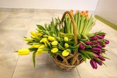 Tulipanes de la primavera en cesta de madera Fotografía de archivo