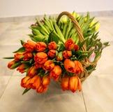Tulipanes de la primavera en cesta de madera Imágenes de archivo libres de regalías