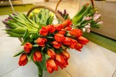 Tulipanes de la primavera en cesta de madera Fotos de archivo libres de regalías