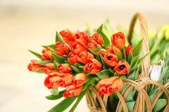 Tulipanes de la primavera en cesta de madera Fotografía de archivo libre de regalías