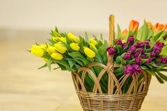 Tulipanes de la primavera en cesta de madera Fotos de archivo