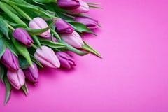 Tulipanes de la primavera en rosa fotos de archivo libres de regalías