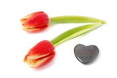 Tulipanes de la tarjeta del día de San Valentín Fotos de archivo