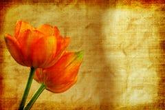 Tulipanes de la vendimia Imagen de archivo libre de regalías
