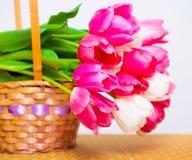 Tulipanes de las flores, rosados y blancos en la cesta, blanca Foto de archivo libre de regalías