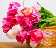 Tulipanes de las flores, rosados y blancos en la cesta, blanco aislada Imágenes de archivo libres de regalías