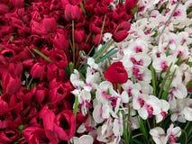 Tulipanes decorativos y orquídeas de las flores rojos y blancos Imágenes de archivo libres de regalías