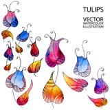 Tulipanes del arco iris ilustración del vector