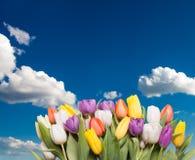Tulipanes del color sobre el cielo fotos de archivo