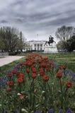 Tulipanes del cuadrado de Lafayette Imágenes de archivo libres de regalías