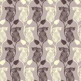 Tulipanes del modelo. Fotografía de archivo libre de regalías
