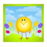 Tulipanes del polluelo y cielo amarillos del resorte Imagen de archivo libre de regalías