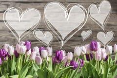 Tulipanes del ramo y marcos blancos y rosados del corazón con el copyspace del textspace de las palabras Fotografía de archivo libre de regalías