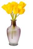 Tulipanes del resorte aislados imagen de archivo