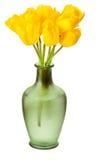 Tulipanes del resorte aislados fotografía de archivo libre de regalías