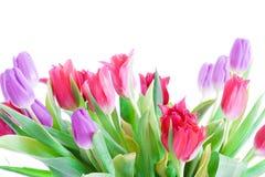 Tulipanes del resorte aislados en un blanco Imagen de archivo