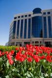 Tulipanes del resorte en la oficina Imagenes de archivo