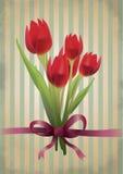 Tulipanes del rojo de la vendimia Imagen de archivo libre de regalías