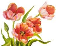 Tulipanes del rojo del vintage