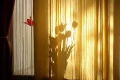 Tulipanes detrás de una cortina en la ventana en un día soleado Fotografía de archivo