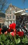 Tulipanes en Amsterdam Fotografía de archivo