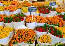 Tulipanes en Amsterdam Foto de archivo