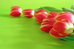 Tulipanes en backround verde foto de archivo