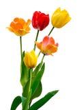Tulipanes en blanco imagen de archivo