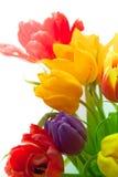 Tulipanes en bouqet Imágenes de archivo libres de regalías